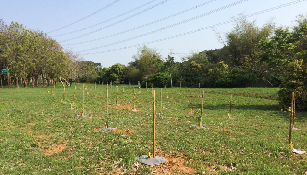 The Taiwan Reforestation Association initiated a restoration plan for Dadu forests