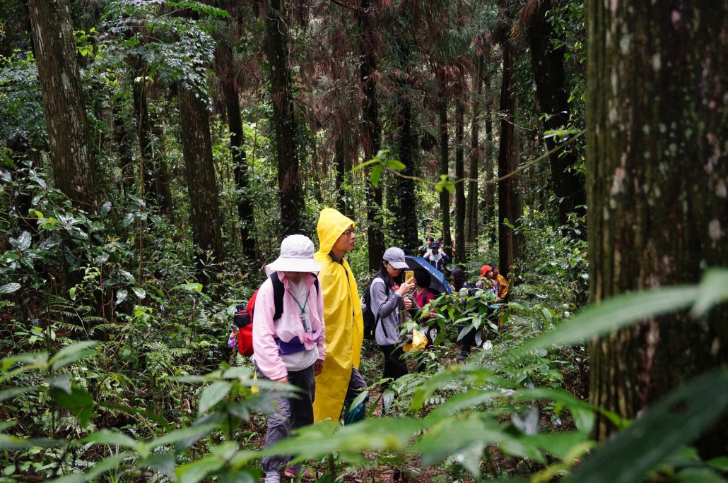 Walking into the woods allow people to reflect on the deforestation issue and the actions that can be taken